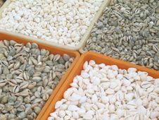 Free Small Kind Of Sea Shells. Stock Photo - 1305170