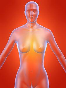 Free Female Anatomy Royalty Free Stock Images - 1305879