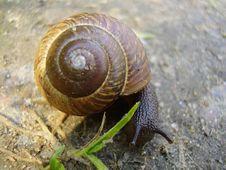 Free Snail Stock Image - 1306651