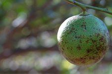 Free Biological Lemon Royalty Free Stock Photos - 1306778