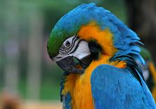 Free Macaw 2 Royalty Free Stock Image - 1306856