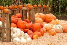 Piles Of Pumpkins Stock Image