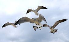 Free Flock Of Seagulls Stock Photos - 1308043