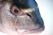 Free Dorada Fish Head Stock Photo - 1309070