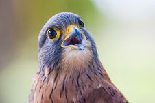 Free Brown And Gray Bird Stock Image - 130289121