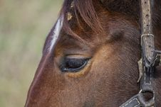 Free Closeup Photography Of Brown Horse Royalty Free Stock Image - 130424116