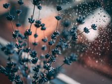 Free Lavender Flower Beside Window Royalty Free Stock Photography - 130424177
