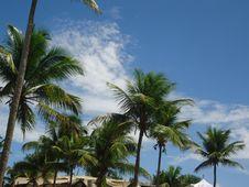 Free Sky, Tropics, Tree, Vegetation Stock Photography - 130472222