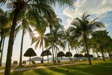 Free Palm Tree, Arecales, Tropics, Tree Royalty Free Stock Image - 130472246