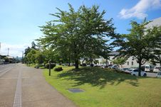 Free Tree, Woody Plant, Sky, Plant Stock Image - 130473021