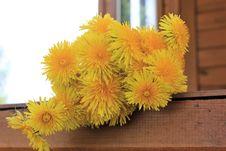 Free Flower, Yellow, Dandelion, Cut Flowers Stock Images - 130473084