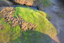 Free Vegetation, Nature Reserve, Ecosystem, Algae Stock Image - 130473211