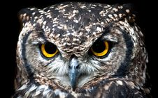 Free Close Up Photography Of Owl Royalty Free Stock Images - 130492169