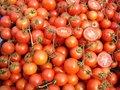 Free Tomatoes Stock Photos - 13056653