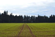 Free Field, Agriculture, Sky, Crop Royalty Free Stock Images - 130563129