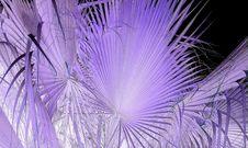 Free Purple, Violet, Lilac, Close Up Stock Image - 130563171