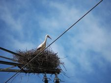 Free Sky, Bird, Stork, White Stork Stock Photos - 130563183