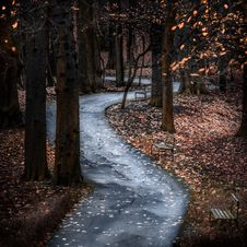 Free Photo Of Pathway Surrounded By Trees Stock Images - 130575164