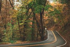 Free Gray Concrete Roadway Beside Green And Brown Leafed Trees Stock Image - 130575271