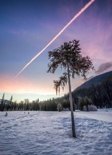 Free Tree On Snowy Forest Clearing Under Clear Sky Royalty Free Stock Photography - 130575447
