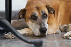 Free Short-coated Brown And Black Dog Laying On Ground Royalty Free Stock Photography - 130575477