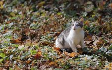 Free White And Tabby Cat Stock Images - 130575504