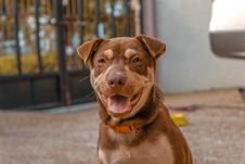 Free Close-Up Photo Of Brown Dog Royalty Free Stock Images - 130575509
