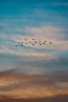 Free Photo Of A Flock Of Flying Birds Royalty Free Stock Photo - 130575595