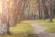 Free Photo Of Pathway Surrounded By Trees Stock Images - 130644654