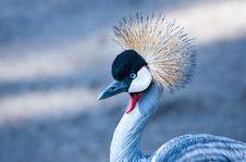 Free Crane Bird Royalty Free Stock Images - 130644739