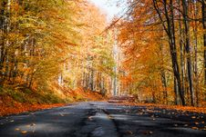 Free Photo Of Roadway During Fall Stock Photo - 130644740