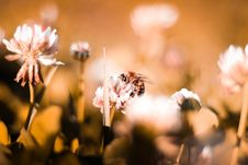 Free Macro Photography Of Bee Perched On Flower Royalty Free Stock Images - 130644869