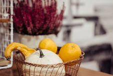 Free Selective Focus Photography Of Orange Citrus Fruits And White Pumpkin In Basket Stock Photography - 130644872