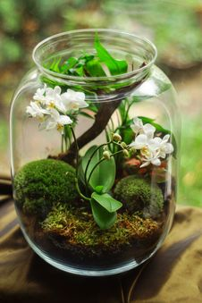 Free Clear Glass Terrarium With White Petaled Flowers Royalty Free Stock Photography - 130706847