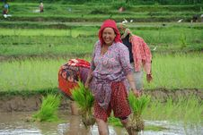 Free Agriculture, Field, Paddy Field, Rural Area Royalty Free Stock Image - 130784676
