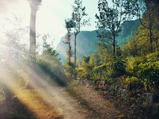 Free Nature, Ecosystem, Path, Forest Stock Photos - 130784693
