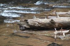 Free Water, Wood, River, Driftwood Royalty Free Stock Photo - 130784755