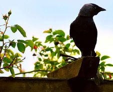 Free Bird, Fauna, Beak, Branch Royalty Free Stock Image - 130784796