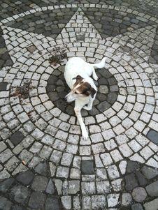 Free Dog Like Mammal, Cobblestone, Road Surface, Snout Stock Image - 130784881