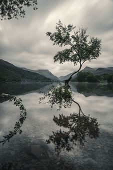 Free Tree With Reflection On Body Of Water Royalty Free Stock Photos - 130895828