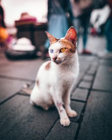 Free White Odd-eyed Cat Sitting On Gray Concrete Pavement Royalty Free Stock Photography - 130896027