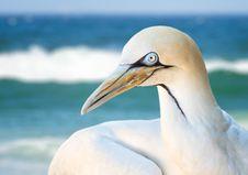 Free Close-up Photo Of Albatross Bird Stock Photography - 130896232
