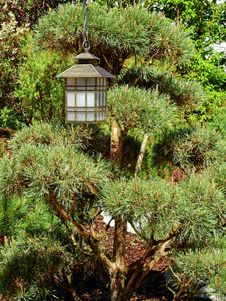 Free Vegetation, Plant, Tree, Biome Royalty Free Stock Image - 130999146