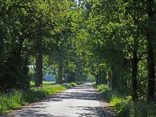 Free Road, Path, Nature, Tree Stock Photography - 130999552