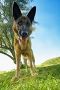 Free It Is Me - Dog Stock Photography - 1311032