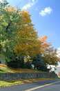 Free Autum Trees And Road Stock Photo - 1312860