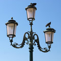 Free Lamppost And Pigeons. Royalty Free Stock Photo - 1314275