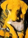 Free Yellow Dog Stock Photo - 1318630