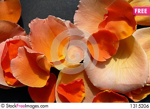 Free Rose Petals Royalty Free Stock Image - 1315206