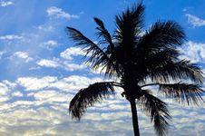 Free Sky Palm Stock Photos - 1312983